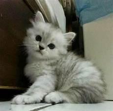 Serius Comel 18 Gambar Kucing Bermata Besar Yang