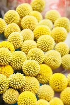 fiore a palla fiori a palla gialla foto stock 169 shebeko 27814843