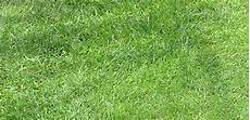 rasen zu kurz gemäht gartentipps rasenpflege im sommer 187 pflanzk 252 bel