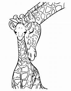 baby giraffe drawing at getdrawings free