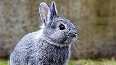 l 246 wenz 228 hnchen kaninchen zdfmediathek