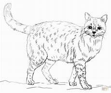 printable realistic animal coloring pages at getcolorings com free printable colorings pages