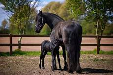 101 Gambar Kuda Paling Bagus Dari Berbagai Belahan Dunia