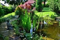 A Wildlife Pond Ponds4u