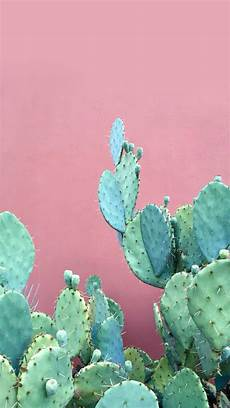 aesthetic cactus iphone wallpaper desktop iphone wallpapers desktop backgrounds pink