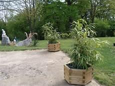 des bambous en pot ma vie est un fleuve tranquille