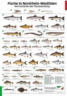 fischarten liste mit bildern shop fishing king fischereipr 252 fung
