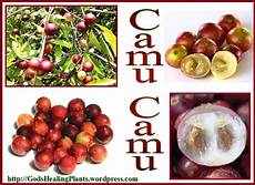 Camu Camu - camu camu a superfood god s healing plants