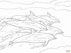 bottlenose dolphins school coloring page free printable