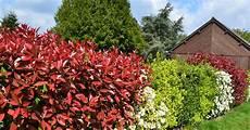 quand planter des arbustes types de haies les diff 233 rentes haies et cl 244 tures v 233 g 233 tales