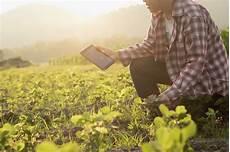 rideau de agronomia ideau passo fundo