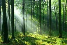 12 000 Hektar Lahan Di Jabar Bakal Jadi Hutan Negara