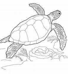 Malvorlagen Turtles Zum Drucken Ausmalbilder Malvorlagen Schildkr 246 Te Kostenlos Zum