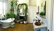 plante verte pour salle de bain 1728 best salle de bain images on