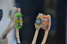 Wie Oft Sollte Die Zahnbürste Wechseln - wer angst vor spinnen hat sollte um 19 35 uhr nicht im