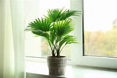 palmen für zuhause bildquelle 169 africa studio