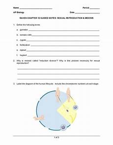 cell reproduction mitosis and meiosis worksheet answers driverlayer search engine