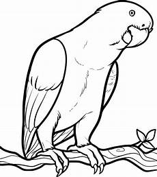coloring picture of animals for