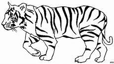 Tiger Malvorlagen Zum Ausdrucken Kostenlos Tiger Ausmalbilder Drachen Zum Ausmalen Ausmalen