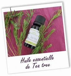 l huile d arbre à thé huile essentielle de tea tree arbre 224 th 233 aroma zone