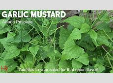 how to cook mustard greens