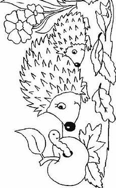 malvorlage igeln igeln igel ausmalbild malvorlagen tiere