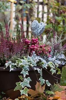 Pflanzen Winterhart Balkon - detailaufnahme winterliche balkonbepflanzung im