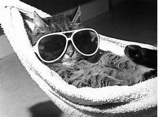 Katze Mit Sonnenbrille - never late if you missed the ipkat this week the ipkat