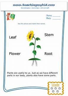 parts of plants kindergarten worksheets 13581 kindergarten learning match the parts of a plant