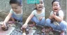 Anak Kecil Menangis Meratapi Ayamnya Yang Mati Ini