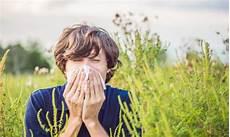 allergia alle graminacee alimenti vietati allergia alle graminacee cause sintomi cure e rimedi