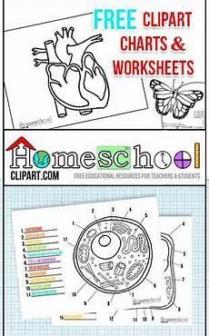science worksheets websites 12458 free science charts worksheets elementary science science clipart homeschool
