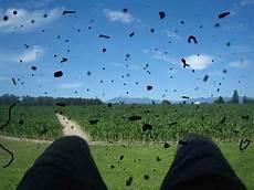 mosche volanti cure mosche volanti o floaters un fastidioso e comune