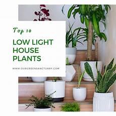 low light houseplants our green sanctuary
