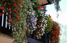 terrazzo in fiore fiori piante e giardini mondo idee per balconi e
