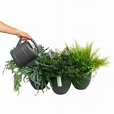 farn pflege draußen farne pflege 123zimmerpflanzen