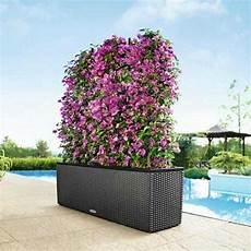 allestimento terrazzi allestimento piante giardini terrazzi napoli monfleur