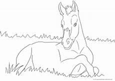 ausmalbild mit pferd fohlen ausmalbilder pferde