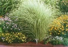 Und Gräser - hortist of ornamental grasses