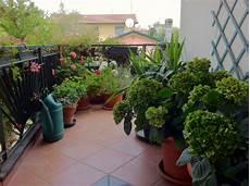 fiori in terrazzo il piccolo giardino di l il terrazzo della mamma