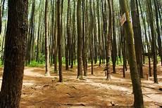 Harga Tiket Masuk Hutan Pinus Mangunan Tempat Wisata Baru