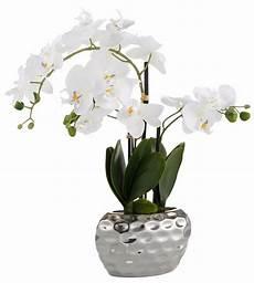 Kunst Orchidee Im Topf - orchidee kunststof in de winkel otto