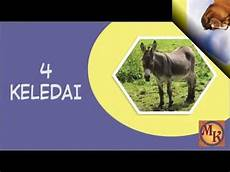 Binatang Darat Yang Halal Untuk Dimakan