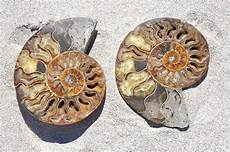 the actual meaning of fossils explained with