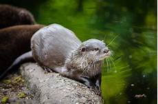 Gambar Alam Margasatwa Kebun Binatang Binatang