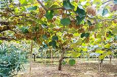 list of top 10 fruit trees with images way2info