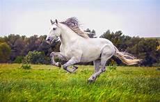 Ausmalbilder Pferde Schleich Pferde Ausmalbilder Zum Ausdrucken