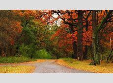 Fall Colors Desktop Wallpaper   WallpaperSafari