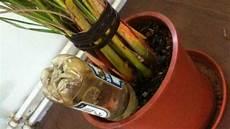 pflanzen bewässern mit plastikflasche flaschen statt blumen gie 223 en frag mutti