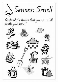 image result for animal noses worksheet educational preschool worksheets five senses